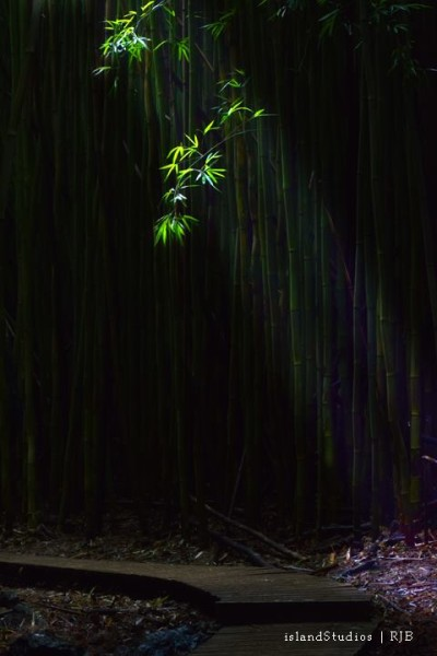 Island Studios - Sunlight through the Bamboo